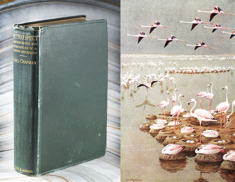 Retrospect: Reminiscences and Impressions of a Hunter-Naturalist in Three Continents 1851-1928. Abel Chapman.