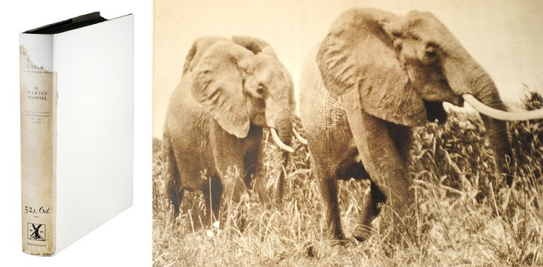 Stalking Big Game with a Camera in Equatorial Africa. With a Monograph on the Africa Elephant. Marius Maxwell.
