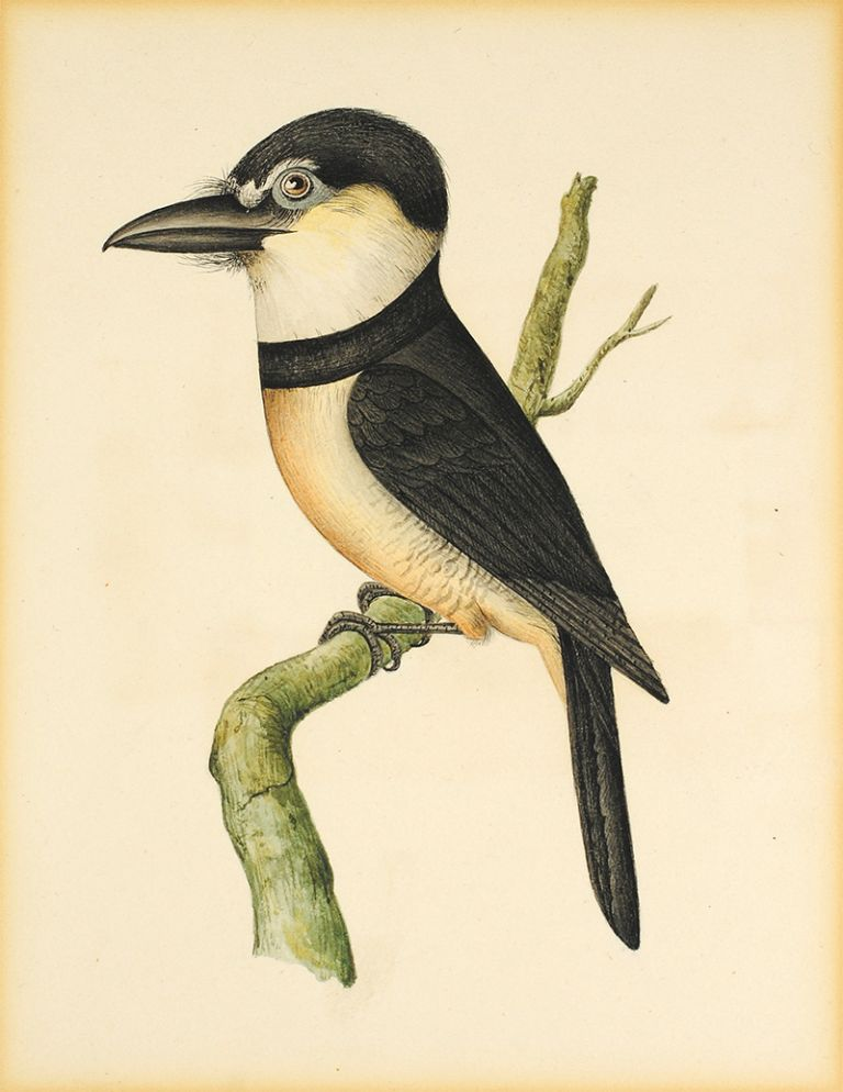 Seven original watercolors of birds and animals. Zoological Illustrations.
