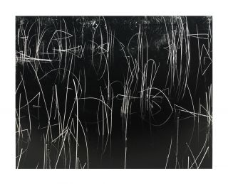 Reeds [and Black Water]. Brett Weston